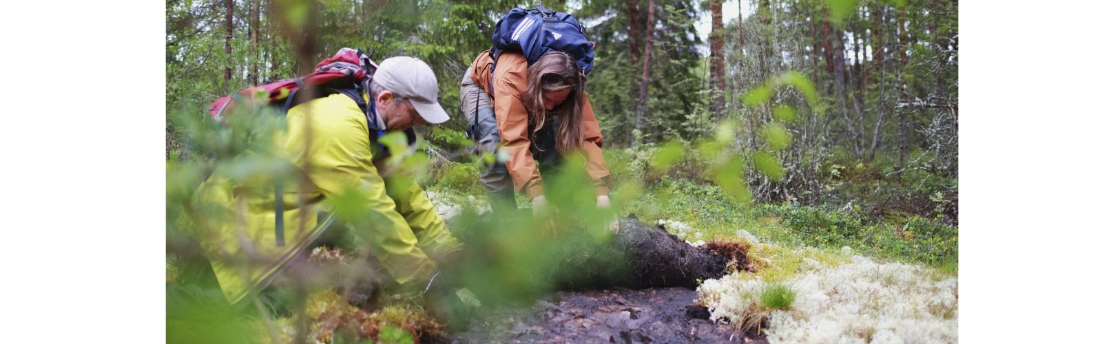 Two researchers pull back moss from a peperite outcrop, Karelia, Russia.